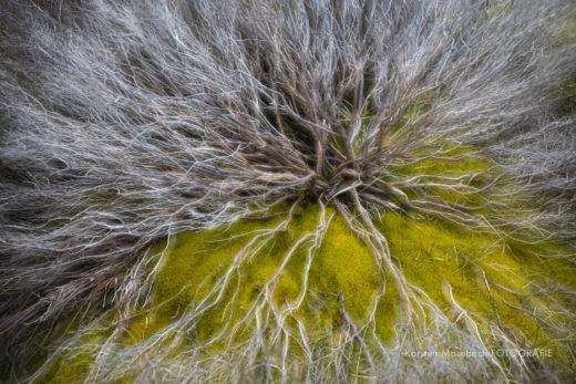 Busch, Naturfotografie Karsten Mosebach