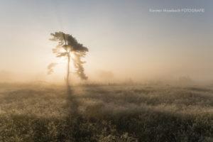 Kiefer im Moor, Foto Karsten Mosebach