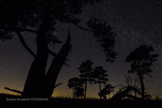 Moor bei Nacht, Foto Karsten Mosebach