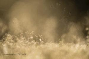 Rothirsch, Foto Karsten Mosebach