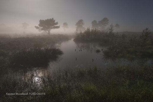 Venner Moor, Naturfotografie Karsten Mosebach