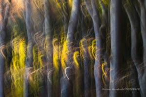 Wald im Herbst, Foto von Karsten Mosebach