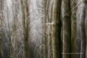 Wald im Winter, Foto von Karsten Mosebach